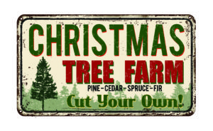 Christmas Tree Farms near me   IrisMagic Photo Studios – IrisMagic Photo Studios