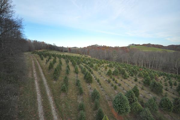 Christmas Tree Farms near me | IrisMagic Photo Studios – IrisMagic Photo Studios