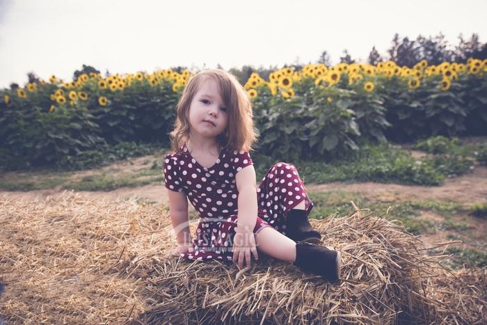 Duda Farms Sunflower Field