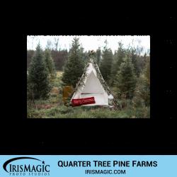 Quarter Tree Pine Farms